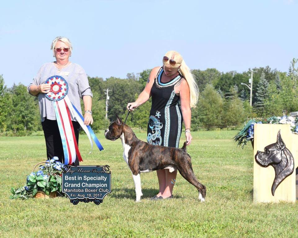 Markus the CKC and AKC champion boxer winning a working and herding specialty dog show in Manitoba Canada
