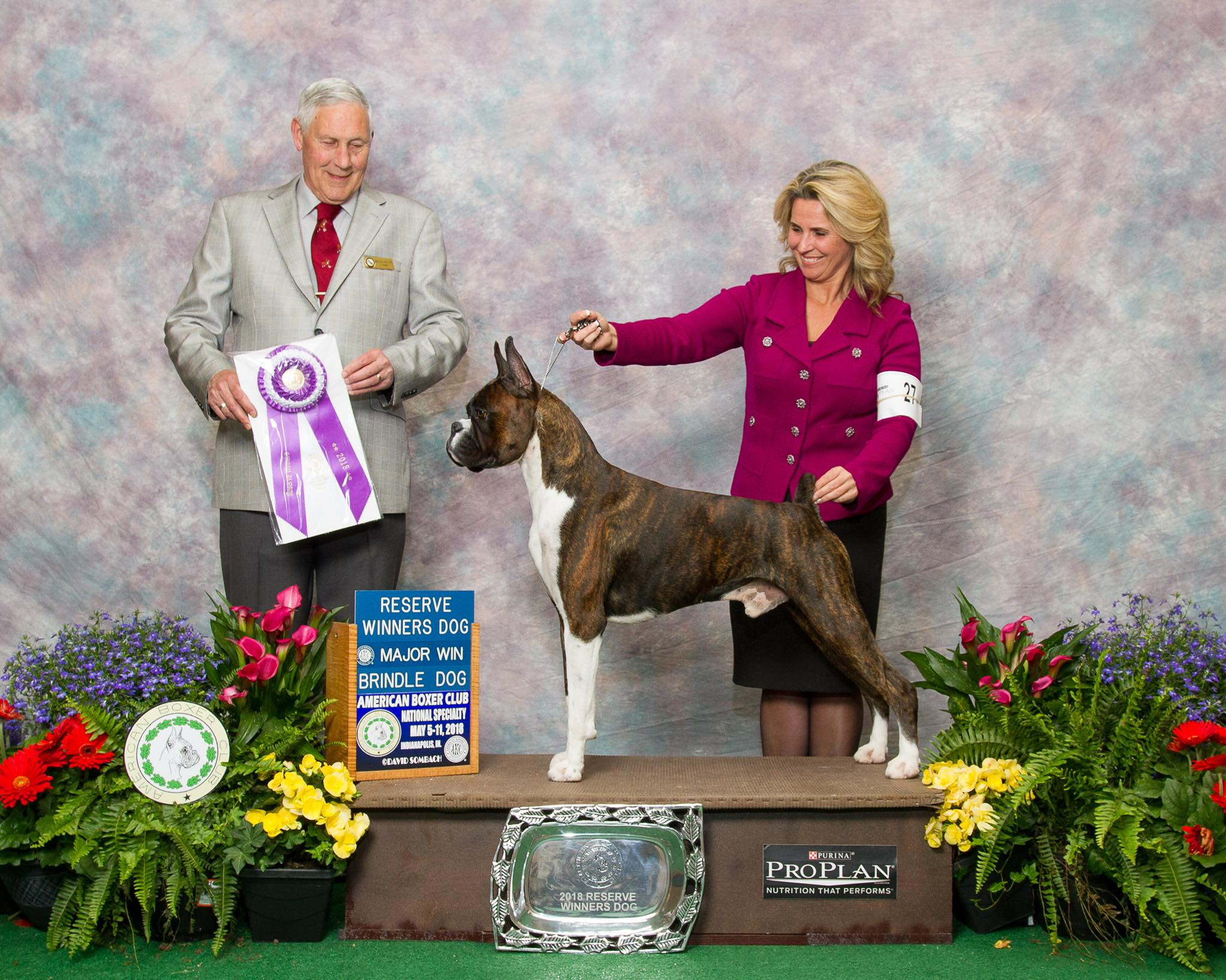 Markus the CKC and AKC champion boxer in a win photo with his dog show handler in Washington USA