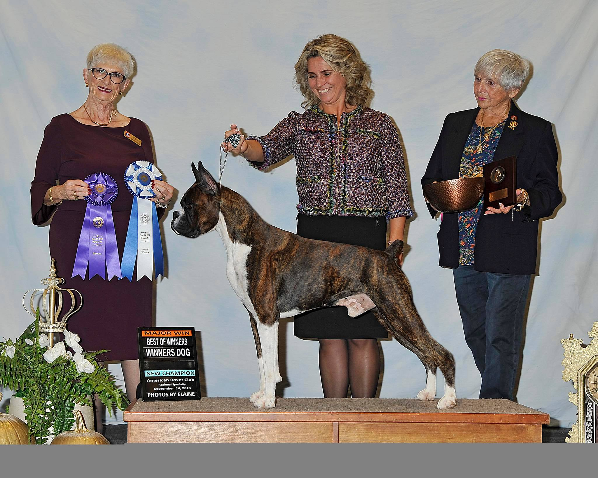 Markus the champion CKC and AKC boxer in a dog show win photo